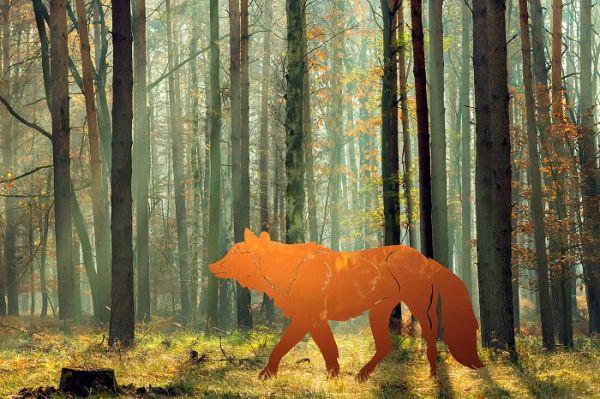 Fuchs -jagend